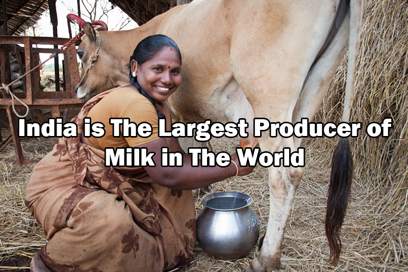 largest producer of milk in the world